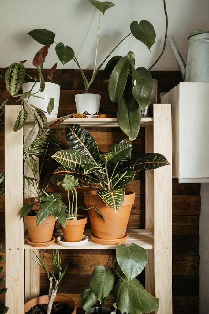 Plantas ecológicas en macetas capaces de depurar el aire