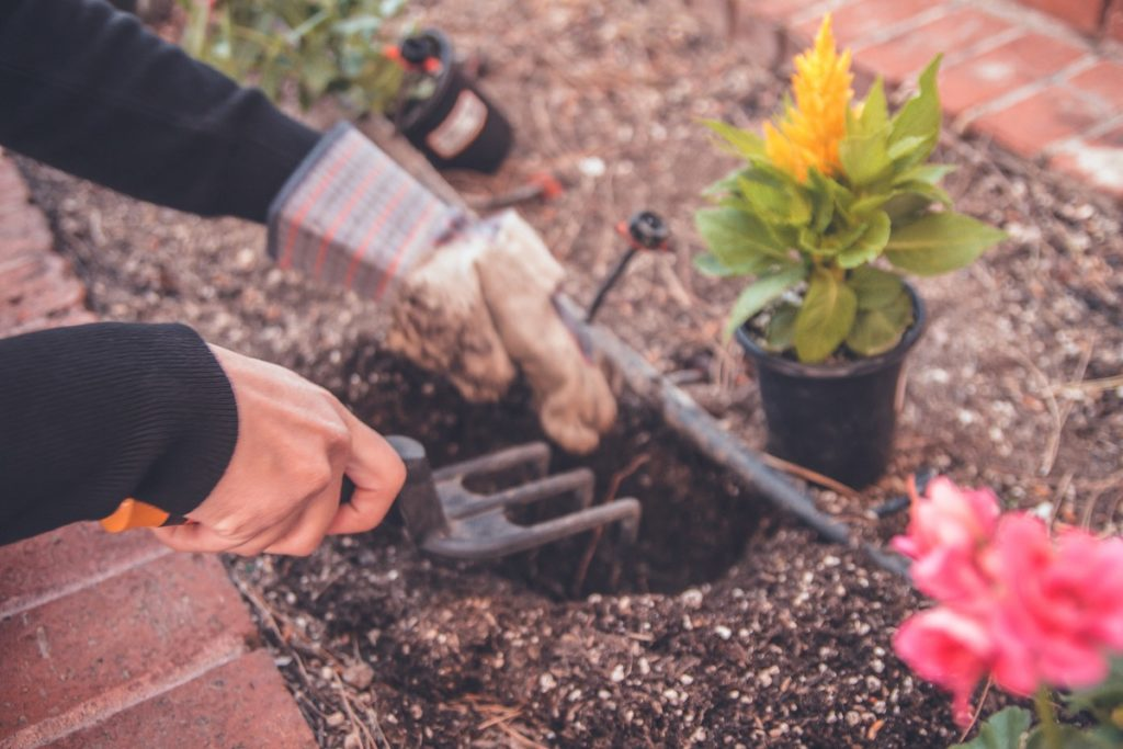 Imagen ¿Cuándo plantar?