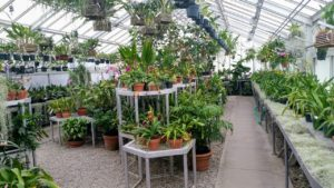 Plantas ecológicas capaces de depurar el aire
